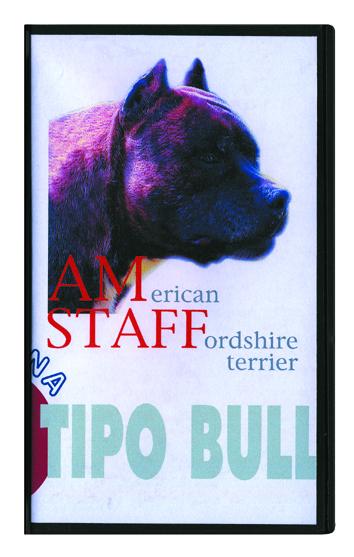 06_ American Staffordshire Terrier